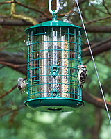 Downy Woodpecker, Tufted Titmouse. Image taken with a Leica T camera and 55-135 mm lens.