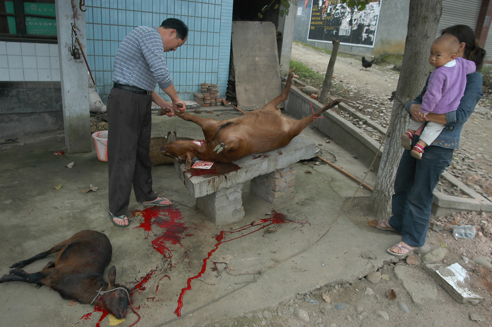 A butcher slaughters a goat in the street.