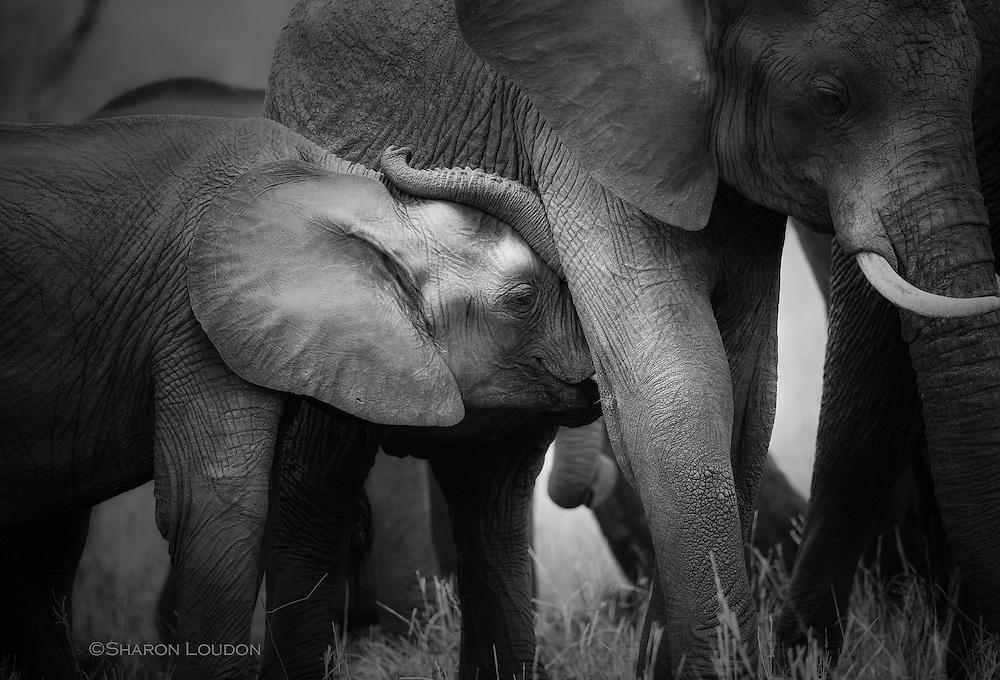 Elephant snuggles - Tarangire, Tanzania