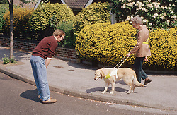 Dog trainer watching woman with visual impairment walking along pavement with guide dog,