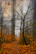 Misty forest on an autumn day - photograph edited with texture overlays