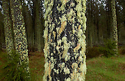 Moss and lichens on tree, North Island, New Zealand