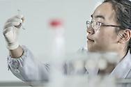 CHINA / Shenzhen /  29/05/2013<br /> <br /> BGI (Beijing Genomics Institute ) , Shenzhen Main Headquarter / A young female scientist holding the Flow-Cell where Genomic data is stored<br /> <br /> © Daniele Mattioli