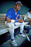 June 27th 1998 Kansas City, MO.Cubs right fielder Sammy Sosa holds an injured bird that was found underneath the bench in the dugout before an interleague game at Kauffman Stadium.Photo by Chris Machian
