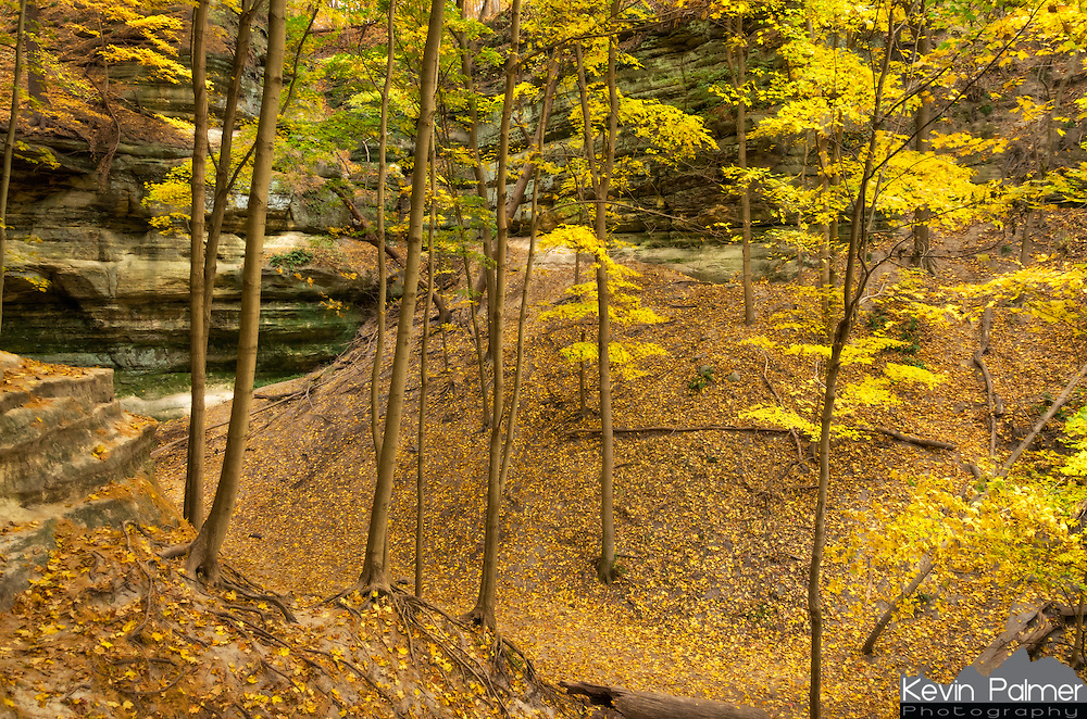 I loved the light in this small Starved Rock canyon covered with fallen leaves.