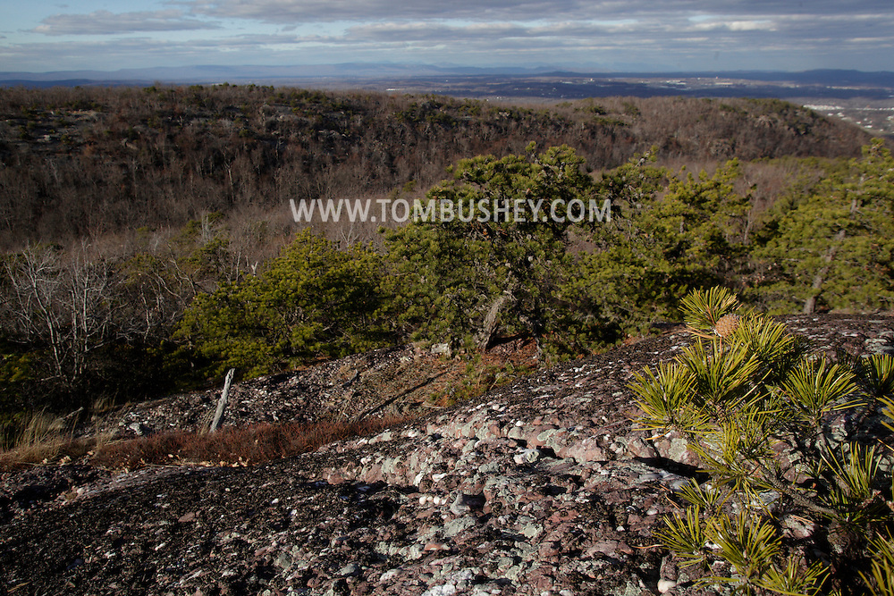 Mountainville, New York - Pitch pine (pinus rigida) grow on the eastern ridge of Schunnemunk Mountain in a view from the Jessup Trail looking toward the western ridge on Nov. 28, 2010.