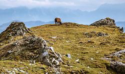 THEMENBILD - ein Schaf auf einer Bergwiese auf dem Kitzsteinhorn an einem sonnigen Tag, aufgenommen am 23. August 2018 in Kaprun, Österreich // a sheep on a mountain pasture on the Kitzsteinhorn on a sunny day, Kaprun, Austria on 2018/08/23. EXPA Pictures © 2018, PhotoCredit: EXPA/ JFK