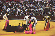 """Finishing off the bull. Tercio de Muerte..Bullfighting in Sevilla's famous bullring """"La Real Maestranza"""" is a significant part of the Feria de Abril..The Feria de abril de Sevilla, """"Seville April Fair"""" dates back to 1847. During the 1920s, the feria reached its peak and became the spectacle that it is today. It is held in the Andalusian capital of Seville in Spain. The fair generally begins two weeks after the Semana Santa, Easter Holy Week. The fair officially begins at midnight on Monday, and runs six days, ending on the following Sunday. Each day the fiesta begins with the parade of carriages and riders, at midday, carrying Seville's citizens to the bullring, La Real Maestranza. Seville. Andalusia. Spain...Blood sport ending in the killing of a bull in front of thousands of spectators. An entertainment and tradition derived from the ancient gladiatorial spectacles of Roman times. This activity is loved and defended by 'affecionados' who see the artistry and traditions whilst it is detested by animal rights activists, environmentalist and ecologists for its cruelty to animals"""