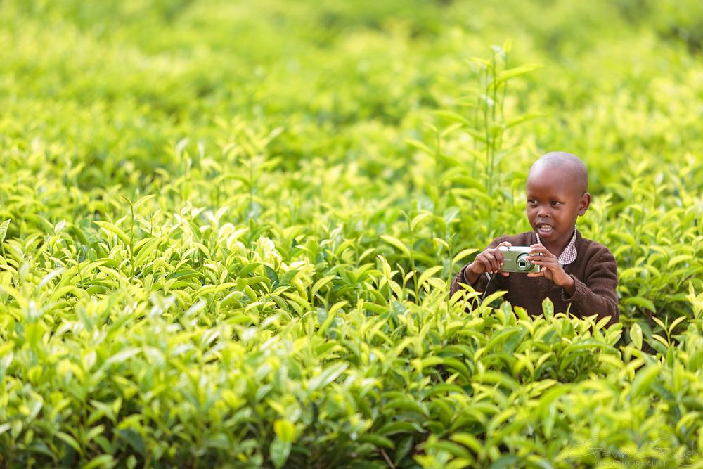 Working in a tea plantation in Kilgoris, Kenya