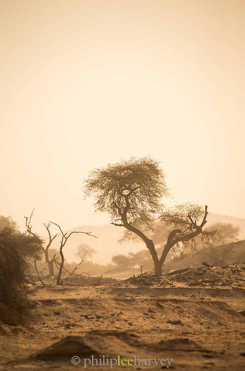The Kaokoveld Desert, Kaokoland, Northern Namibia, Southern Africa