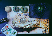 At Stan Winston Studios outside L.A. in Van Nuys, CA., the dinosaurs, like Velociraptor eyes for Steven Spielberg's action epic, Jurassic Park were modeled after a lizard's.