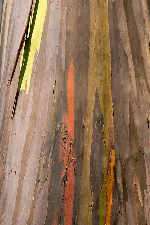 Eucalyptus Palette