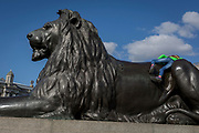A young tourist climbs on top of one of four lions at the base of Nelson's Column in Trafalgar Square, on 10th August 2017, in London, England.