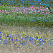 Montana fields, ponds, and summer flowers.
