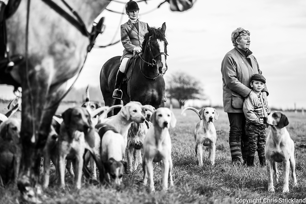 Hawick, Scottish Borders, UK. 24th November 2018. Foxhounds of the Duke of Buccleuch Hunt, a mounted gun pack, flush foxes from cover to guns near Hawick in the Borders.
