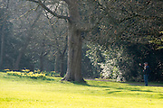 © Licensed to London News Pictures. 12/03/2014. Osterley, UK. A man takes a picture of some daffodils. People enjoy the sunny weather at Osterley House in West London today 12 March 2014. Photo credit : Stephen Simpson/LNP