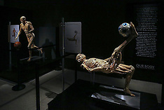 Florida: Museum exhibit about 'Our Body: The Universe Within', 20 Oct. 2016
