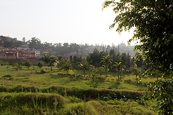Planted Trees In Kigali