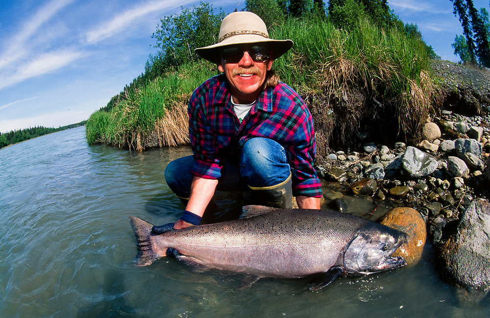Alaska. Kenai River. Fisherman shows King Salmon catch. MR