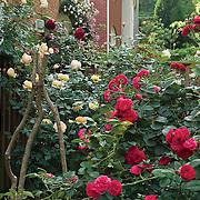 Anna Davis Garden