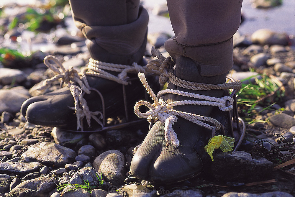 The feet of special zaza-mushi-stalking waders with a special big toe section to best grip the slippery bottom of the cold river; steel crampons are also strapped onto the bottoms of the waders to enhance the stalker's grip, Ina City, Japan. (Man Eating Bugs page 32 Bottom)