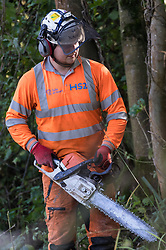 Denham, UK. 29th September, 2020. A tree surgeon working on behalf of HS2 Ltd fells trees in Denham Country Park for works connected to the HS2 high-speed rail link. Anti-HS2 activists based at the nearby Denham Ford Protection Camp and protesting against the destruction of the woodland contend that the area of Denham Country Park currently being felled is not indicated for felling on documentation supplied by HS2 Ltd.