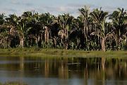 Codo_MA, Brasil...Palmeiras de babacu...The babacu palms...Foto: LEO DRUMOND /  NITRO