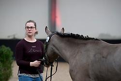 05 - S. Carlando de Luxe<br /> BrP Keuring <br /> Hulsterlo - Meerdonk 2017<br /> © Hippo Foto - Dirk Caremans<br /> 17/03/2017