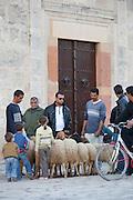 Livestock in street, Sousse Africa;