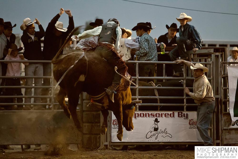 Bull riding action, Eagle Rodeo, Eagle, Idaho, USA