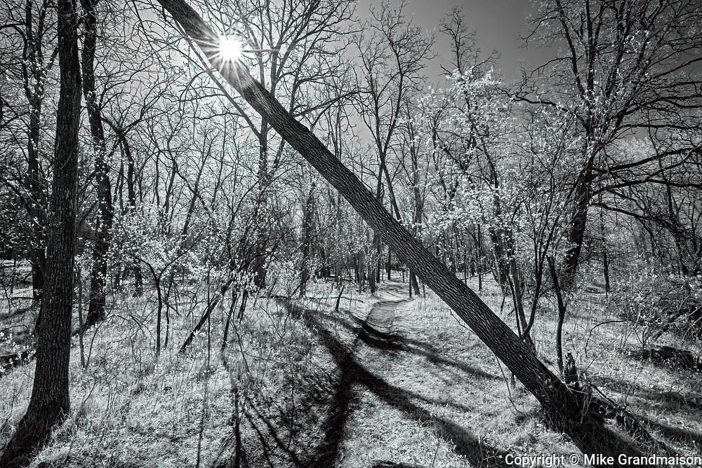 Path in the Seine River forest<br />Winnipeg<br />Manitoba<br />Canada