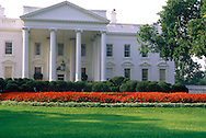 View of the White House from the Rose Garden