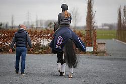 Scholtens Emmelie, (NED), Apache<br /> Dressuurstal Ad Valk - Gorinchem 2015<br /> © Hippo Foto - Dirk Caremans