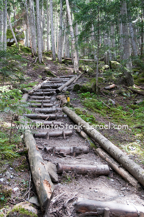 a path in a dense natural forest. Photographed in The Pyrenees mountains, Val d'Aran, Catalonia, Spain
