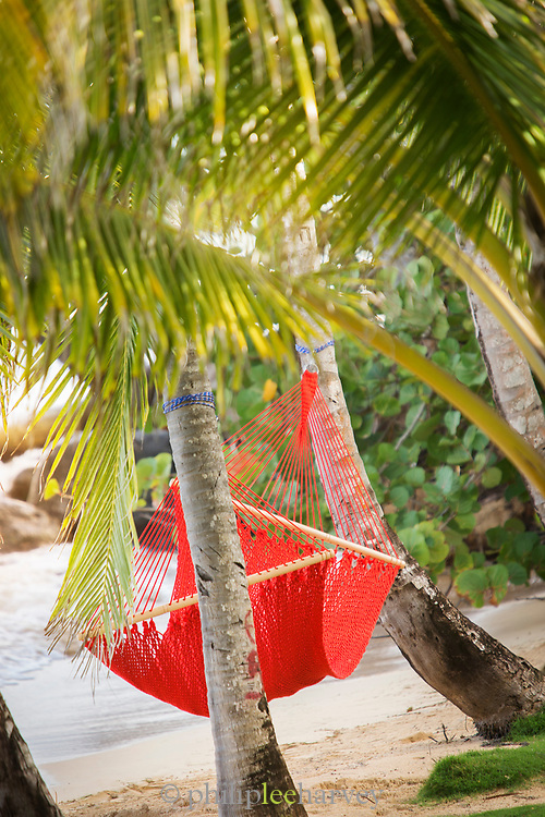 Hammock between palm trees on Little Corn Island in Nicaragua