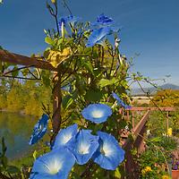 Flowers on Wiltsie house porch near Bozeman, Montana.