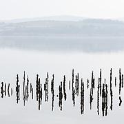 Timber Ponds II, Kelburn, Inverclyde, Scotland.