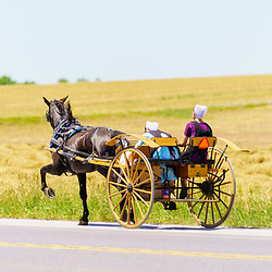 Gordonville, PA, USA / June 8, 2020: Two young Amish girls ride in a two wheel horse-drawn cart along a rural  road Lancaster County.