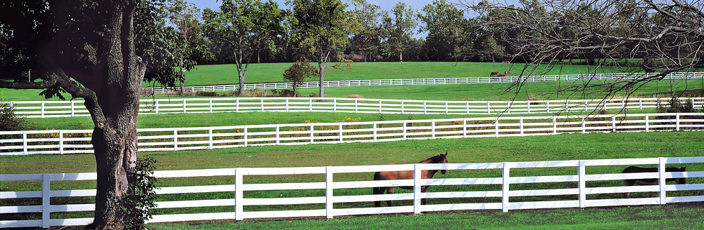 A thoroughbred horse stands by a white fence in Kentucky Horse Park, Lexington, Kentucky.