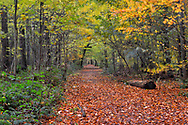 Autumn in Stoke Woods, Oxfordshire