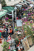 People shop for flowering plants in the Mong Kok Flower Market of Kowloon, Hong Kong.