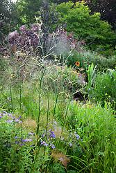 Cobweb on fennel