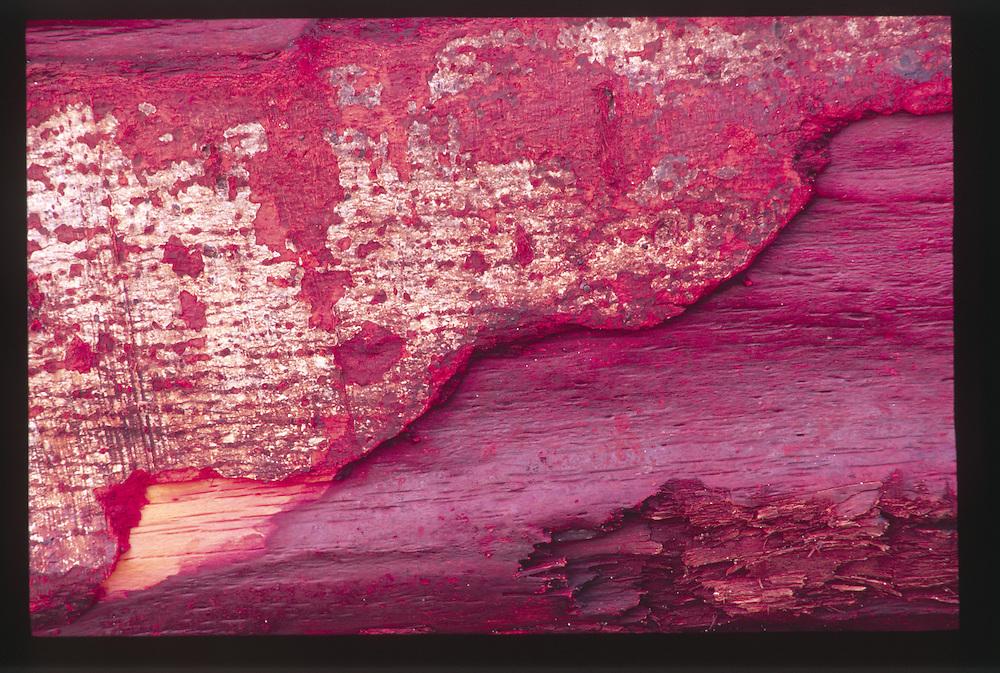 Driftwood Detail at Sunset, Olympic National Park, Washington, US