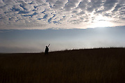 Hunter Timmy Stein is silhouetted in morning sun walking across the crest of some prarie grassland east of Minot, North Dakota. Hunting upland game birds such as pheasand or grouse is a sport which takes much effort, walking and patience. Then when the time comes, the hunter must be ready to take the opportune moments to shoot the birds.
