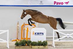 075, Nazario-K<br /> KWPN Hengstenkeuring 2021<br /> © Hippo Foto - Dirk Caremans<br />  02/02/2021