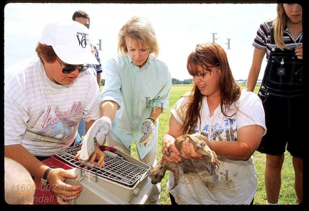 PECA's Paula Martin places prairie dog in cage during capture and relocation effort; Hutchinson. Kansas