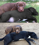 Adorable Before and After pictures of Animals growing up<br /> <br /> Pets and people share a very special bond when they grow up together, which is why we've compiled a list of pictures of people and their pets growing up and sometimes growing old together.<br /> <br /> Because of their shorter lifespans, dogs, cats and other domestic animals tend to grow out of their juvenile forms relatively quickly. In a few months, that cute and doofy puppy that's tripping all over himself will be galloping between your legs enthusiastically, and in a few months more he or she will be approaching their adult size. Their growing bodies and maturity help put the changes in our own lives into perspective as well. It also helps us appreciate the fact that they spend their lives by our sides as our faithful companions.<br /> <br /> Their shorter lifespans also mean that our beloved pets will invariably become a beautiful lesson in both love and loss. Watching your furry childhood friend grow old and die is a harrowing and sorrowful but also natural and potentially enlightening part of life. Of course, that might not be the case for the guy with the tortoise – although their lives are drastically shorter in captivity, a pet that can live for a century or more certainly has a chance to outlive its owner.<br /> ©Exclusivepix