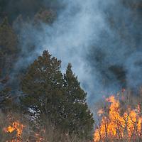 A controlled slash fire burns amid aspens and Douglas fir in the Montana's northern Gallatin Mountains near Bozeman.