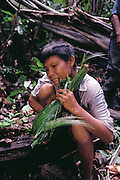 A Yanomami youth named Gregorio Lopez wraps palm worms in palm leaves for transport back to the village, Sejal, Venezuela. (Man Eating Bugs page 172 Bottom)