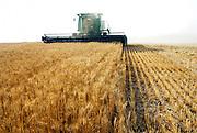 Israel, Negev Desert, combine harvester harvesting wheat
